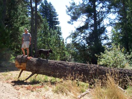 Tree Trust True